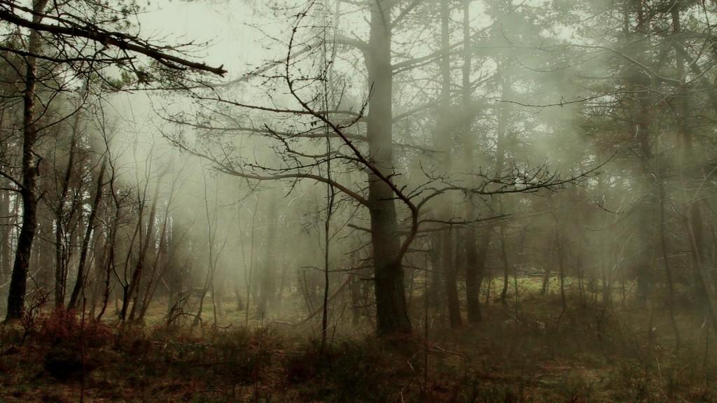 Video still from Spirit, Jillian McDonald, 2013. Image courtesy of the artist.