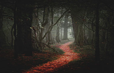 Path thru dark grey woods covered with red and orange leaves